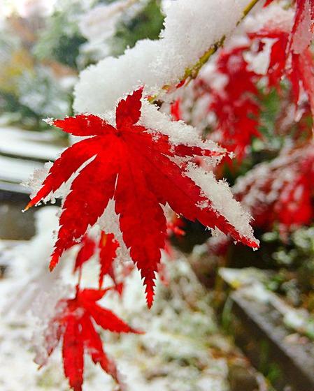 tokyo_snow_3