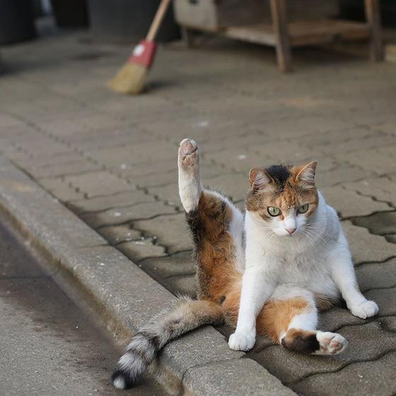 japanese_stray_cat_25
