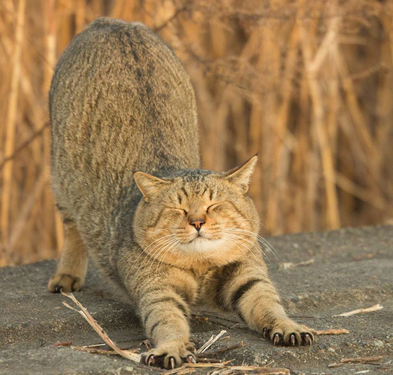 japanese_stray_cat_23
