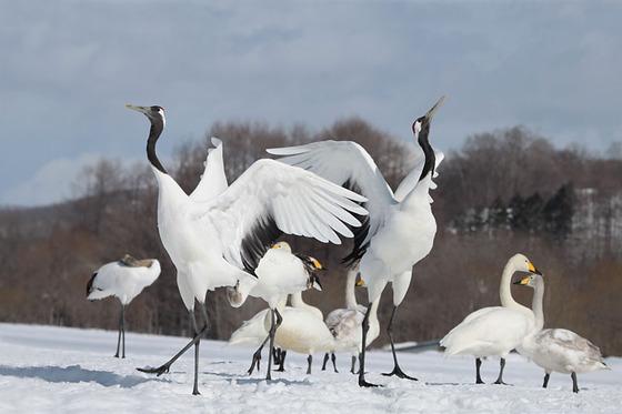 bird_japan_16