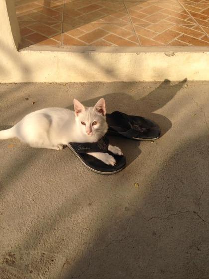 japanese_stray_cat_48