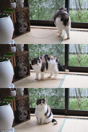 cat_circle5