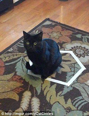 cat_circle12