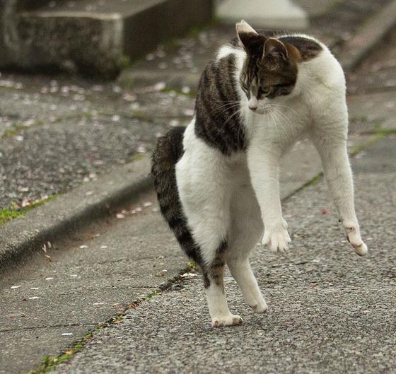japanese_stray_cat_39