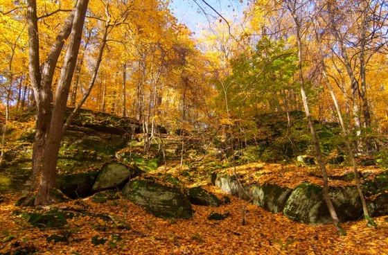 autumn_place_3