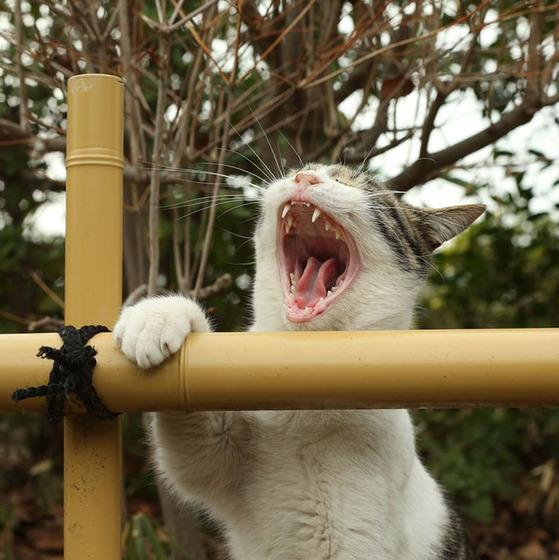 japanese_stray_cat_22