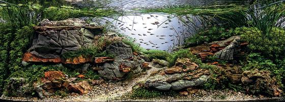 aquarium-8