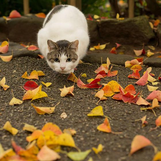 japanese_stray_cat_13