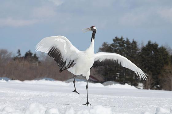 bird_japan_16_2