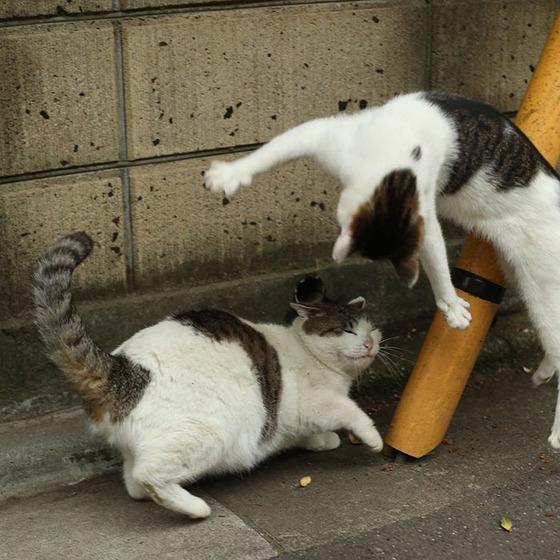 japanese_stray_cat_17