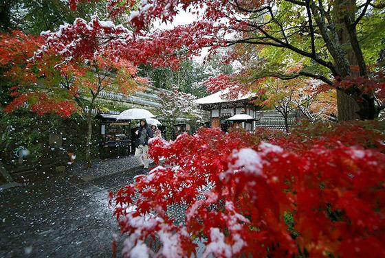 tokyo_snow_11