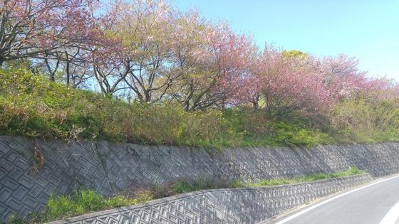 shikoku_23