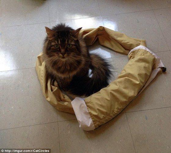cat_circle14