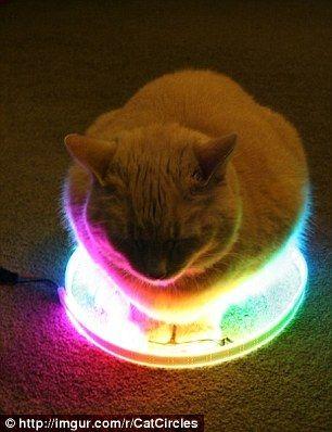 cat_circle13