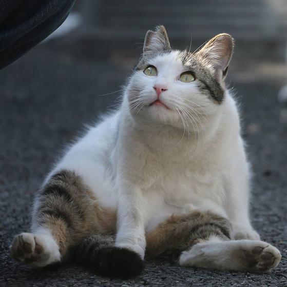 japanese_stray_cat_20