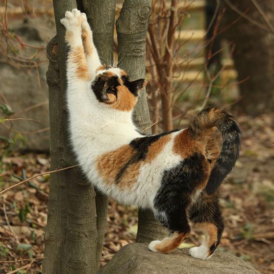 japanese_stray_cat_14