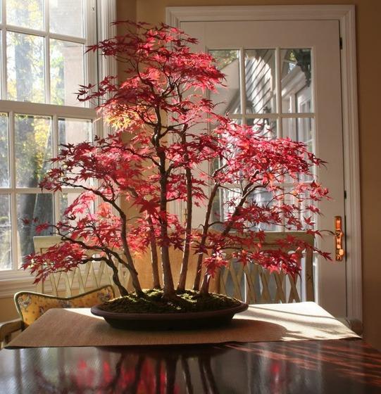 bonsai_style_3