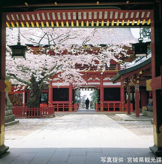 japan_sakura6