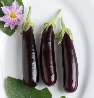 eggplant_10