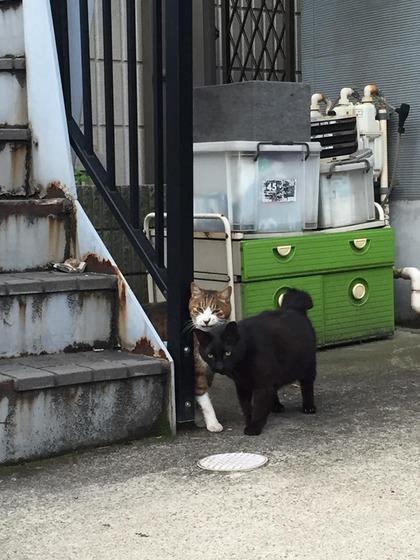 japanese_stray_cat_50