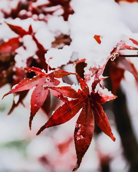 tokyo_snow_15