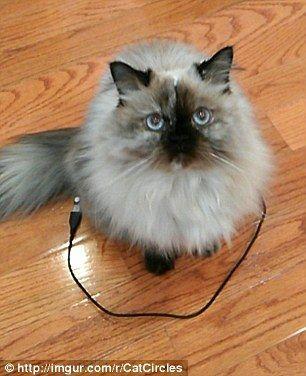cat_circle9