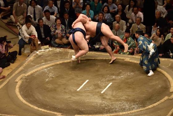 sumo_8