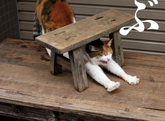 japanese_stray_cat_18