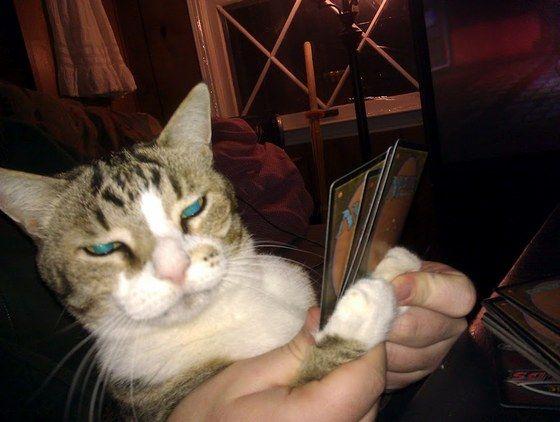 cat_mtg
