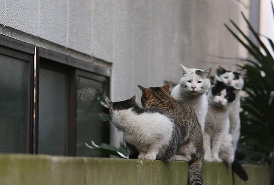 japanese_stray_cat_3