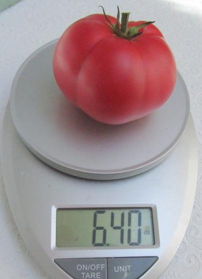 tomato_5