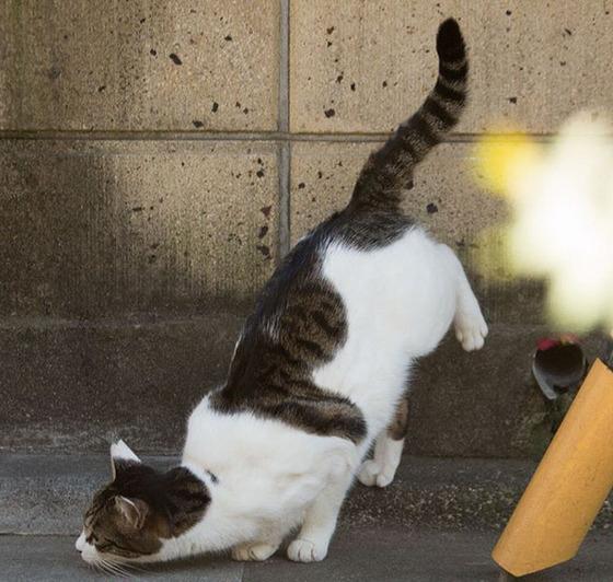 japanese_stray_cat_44