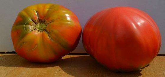 tomato_10