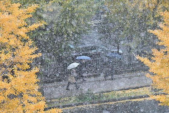 tokyo_snow_27
