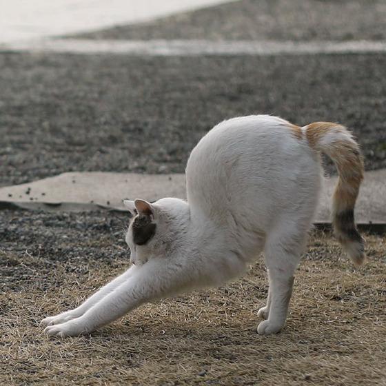 japanese_stray_cat_29