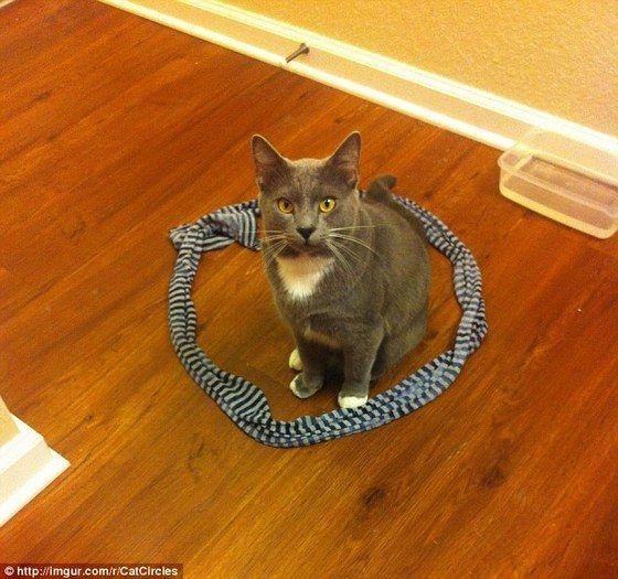 cat_circle11