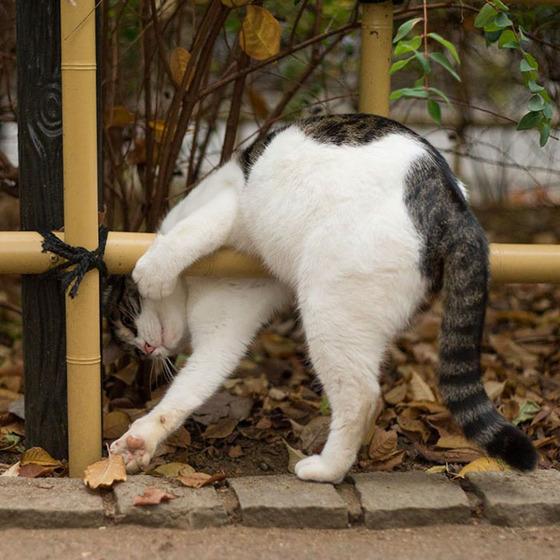 japanese_stray_cat_34