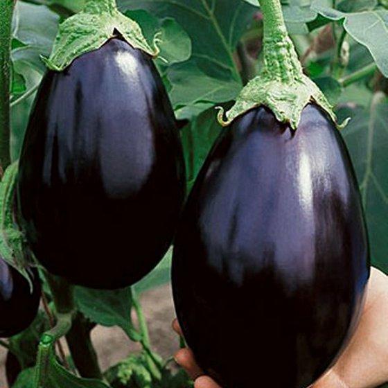 eggplant_6