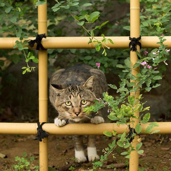 japanese_stray_cat_30