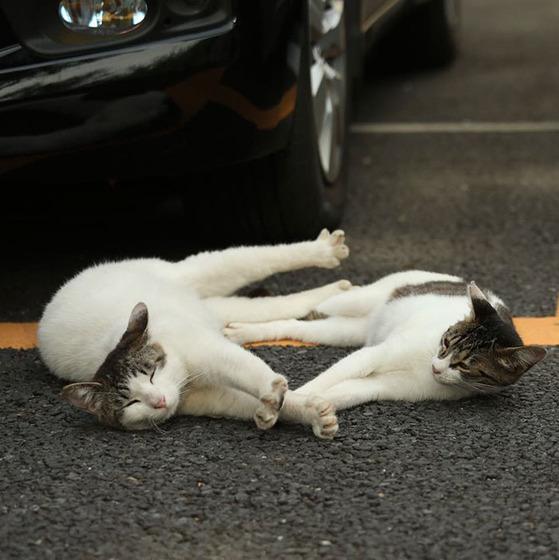 japanese_stray_cat_37