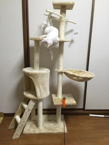japan_parise_4