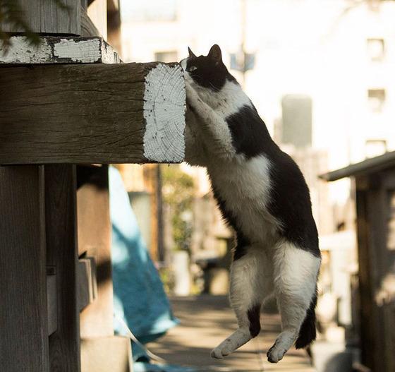 japanese_stray_cat_42