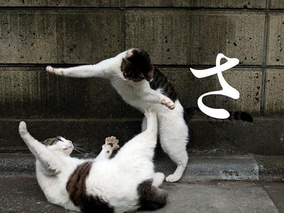 japanese_stray_cat_24