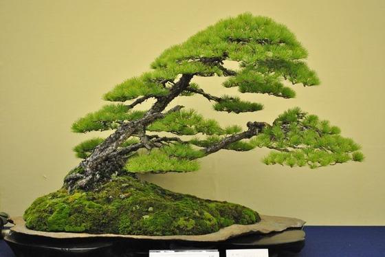 bonsai_style_7