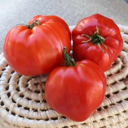 tomato_16