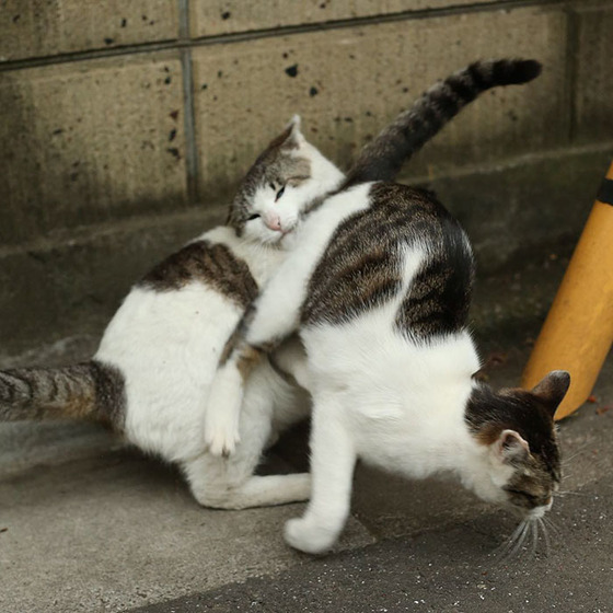 japanese_stray_cat_35