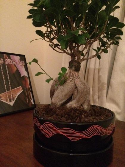bonsai_style_11