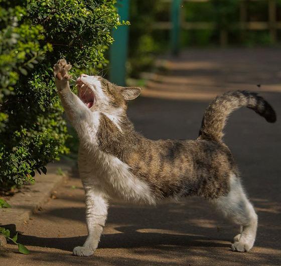 japanese_stray_cat_38