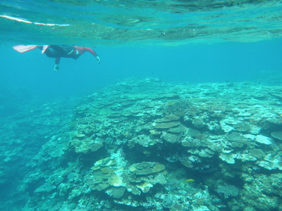 スノー珊瑚