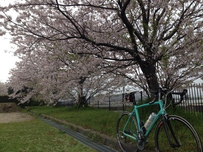 自転車の てるてる 自転車 今津 : 2015年04月 : ブーマーのブログ